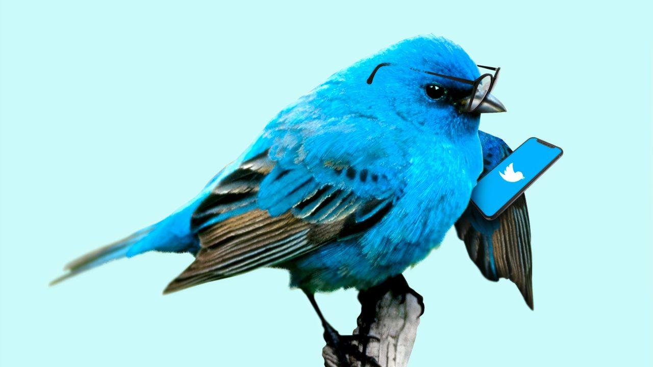 ツイッターをする青い鳥